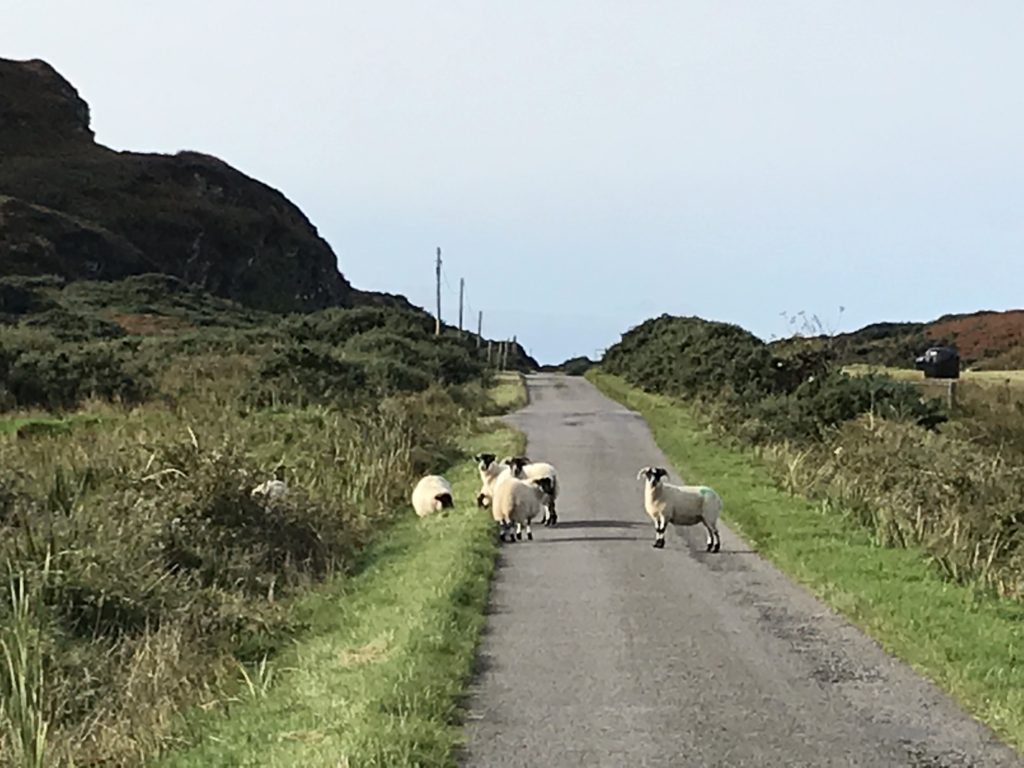 Some sheep on a single lane road through some hills.